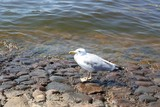 River birds.