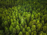 Aerial view of the forest © lukjonis