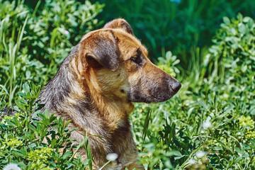 Portrait of Sstreet Dog © Sergej Razvodovskij