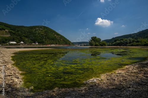 Foto Spatwand Zomer Blaualgen im Rhein