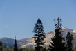 Quadro landscape in Sequoia National Park in California in united states of america