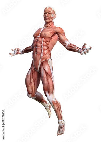 Poster 3D Rendering Male Anatomy Figure on White