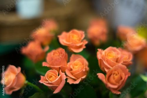 In de dag Kiev roses