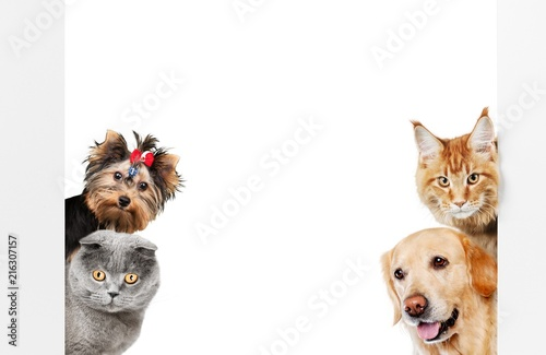 Various cats and dogs as frame - 216307157