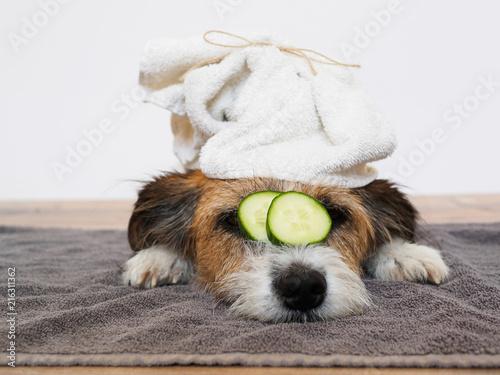 Hund mit Handtuch auf dem Kopf und Gurkenscheiben auf den Augen, Sauberkeit, Hygiene, Fellpflege