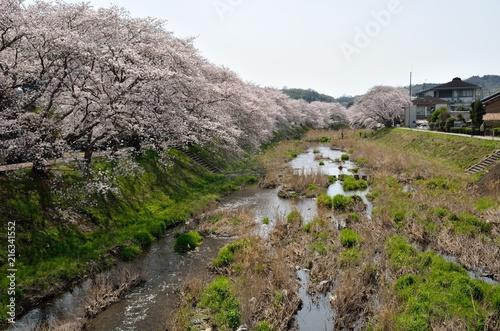 Aluminium Kyoto 京都 田原川の桜