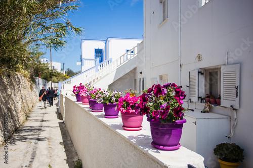 Foto Spatwand Santorini Beautiful purple flowers in purple and pink vases on white washed terraces in Santorini, Greece.