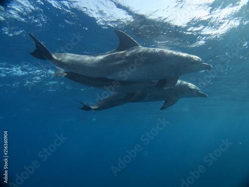 Foto Spatwand Dolfijn OLYMPUS DIGITAL CAMERA