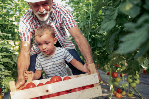 Leinwandbild Motiv Grandfather and his grandson in a greenhouse