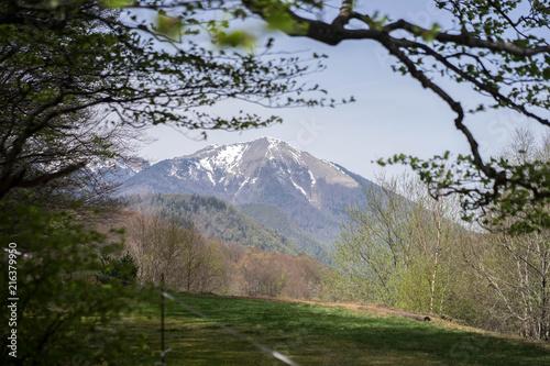 Fotobehang Weg in bos Montagne