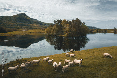 Fotobehang Donkergrijs Norwegian landscape with sheeps