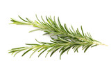 Rosemary spice on the white background. - 216406958