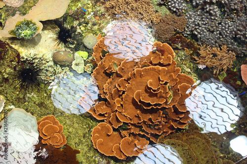 Fototapeta Aquarium de Boulogne sur Mer