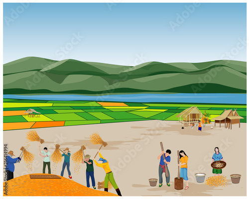 farmer hit the rice vector design - 216414994