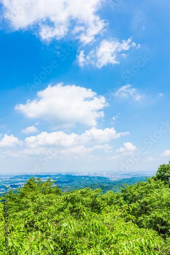 高尾山の大自然 Nature of Mt Takao