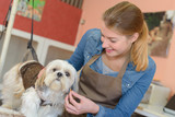Lady working with small dog - 216432937