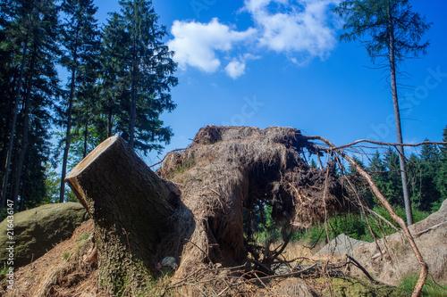 Foto Spatwand Zwart Rund um Tanplan vom 20.07.2018