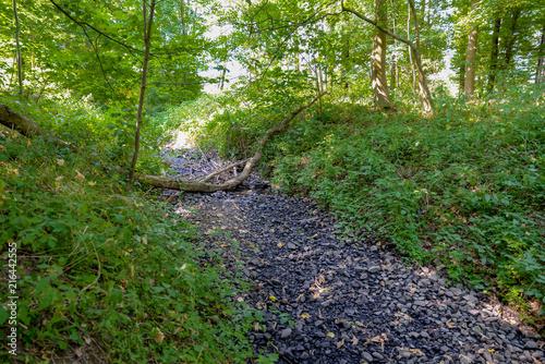 Foto Murales Fluss ausgetrocknet, Klimawandel