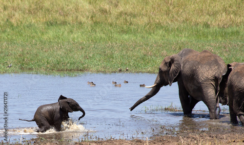 Elephants  playing and drinking in water.