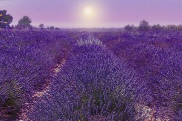 Lavender field. Harvesting. Beautiful sky. Against the backdrop of mountains and clouds. French Provence. Surroundings of Valansol. Map. Toned.
