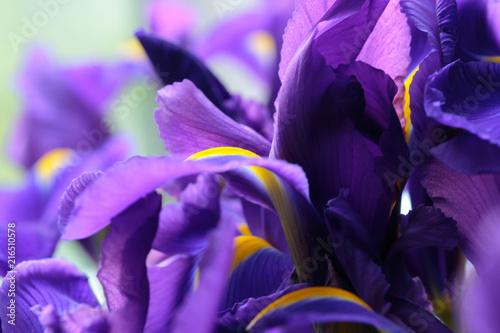 Aluminium Iris Purple delicate iris flowers