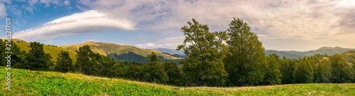 panorama of a beautiful summer landscape. ancient beech forest on the grassy meadow and mountain ridge in the distance under the gorgeous evening sky - 216521709