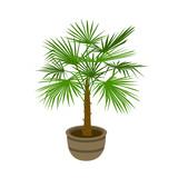 european fan palm isolated vector illustration - 216523984