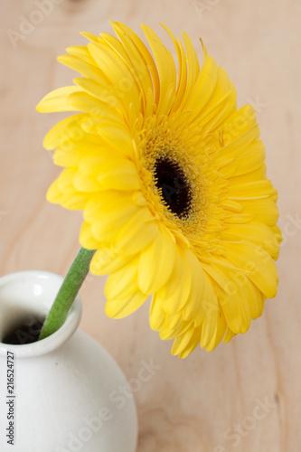 Foto Spatwand Gerbera Flower close gerbera