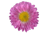 beautiful pink flower isolated on a white background - 216530509