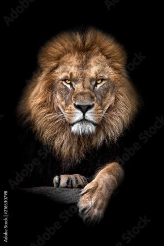 Foto Spatwand Lion Lion King