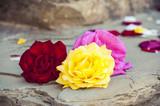 Three coloured roses