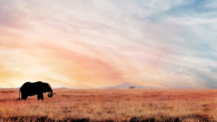 Lonely elephant in the savannah at sunset . African artistic image. National park Serengeti.