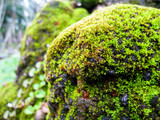 selective focus, moss on the rock. - 216536165