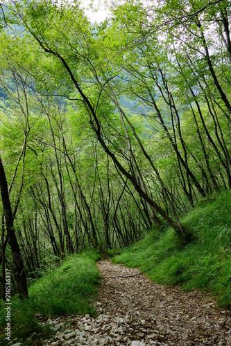 Foto Spatwand Spoorlijn Wilde Natur in den Bergen