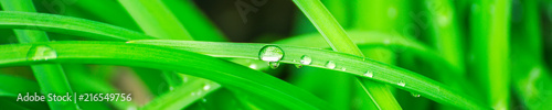 Leinwandbild Motiv Green background with grass. Water drops on the green grass. Drop of dew in morning on a leaf. Banner, header for web design.