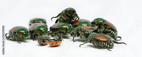 beetle - 216558148