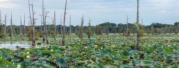 Black Bayou Lake contain a 1,700 acre lake © hegearl