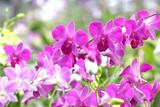 beautiful purple orchid flower