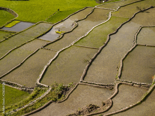In de dag Stenen Banaue Rice Terrace