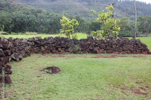 Foto Spatwand Olijf Kauai