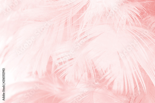 Coral Pink vintage color trends feather texture background  - 216592943