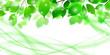 新緑 エコ 曲線 背景 - 216600771