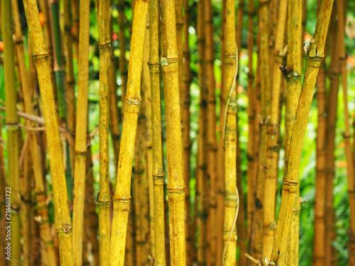 Canvas Bamboe Bambus