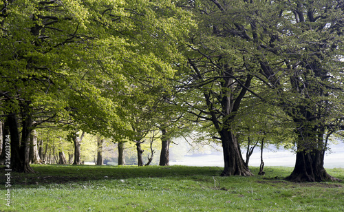 Canvas Lente trees in spring on