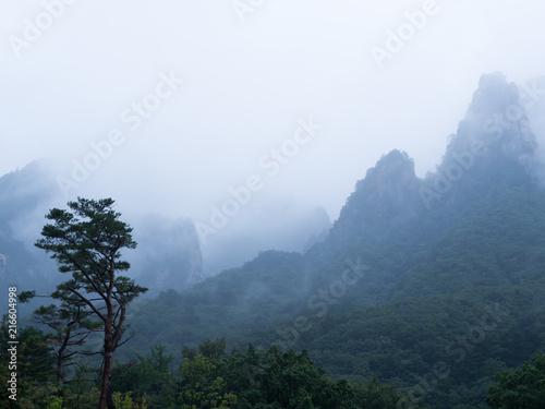 Canvas Lente nature forest mountain landscape