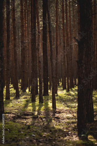 View on trees and flora in natural forest with sunlight