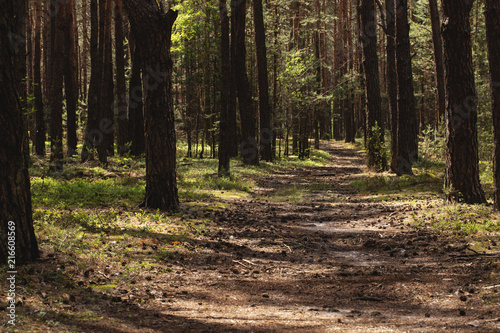 Photograph wallpaper of walkway in the natural jungle with trees and sunlight - 216608569