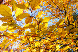Beauty of autumn / wonderful fall colors in the forest :) - 216612772