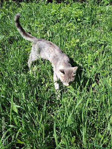 Plexiglas Kangoeroe cat