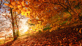 Beauty of autumn / wonderful fall colors in the forest :) - 216613730
